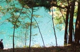 自然の恵みに癒される旅<br>奥多摩森林セラピー