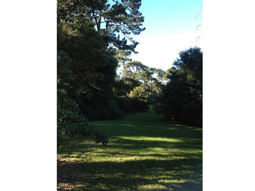 Healingニュージーランド「ティティランギ 癒しの森」