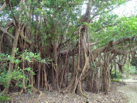 そこに行くだけで癒される! 沖縄の大地や木々に宿る神聖なエネルギーに包まれる