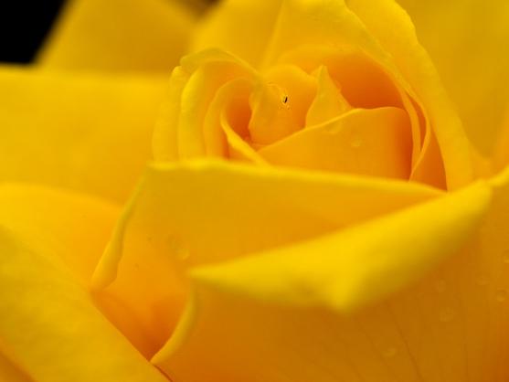 「幸せタイムリー~幸運を引き寄せ運勢を好転させる方法」~運を強化し、願いを叶えるキーポイント PART.1