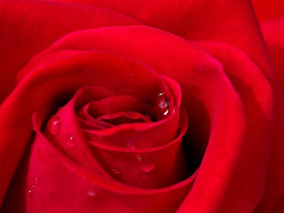 赤色が持つ「狂気性とは?」~多様な意味を持つ色の可能性~