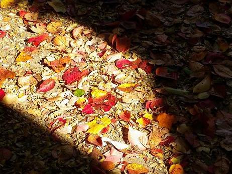 憂鬱・無気力…こんな秋にならないために~自然を感じてリフレッシュしよう!