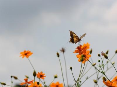 『心理セラピスト』が教える!「昆虫から学ぶ」~命と心の在り方~