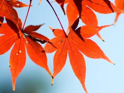 季節の変化に気をつけて!~四季を楽しみながら心身ともに元気に暮らす~