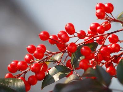 新年のスタートを明るく元気に楽しくするカラーメソッド~正月ボケには赤!~