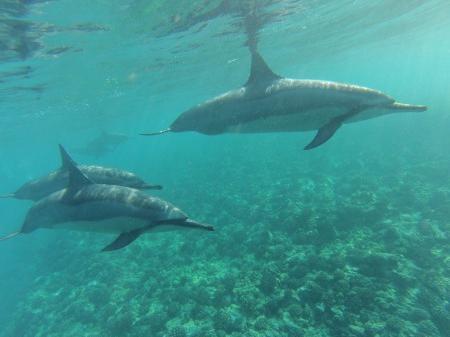 和歌山県・太地町のイルカ漁がもたらすもの~地球上での共存共栄を目指すためには