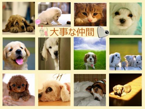 ペットを飼うということ~命を預かり、共に生きていくために大切な「十カ条」