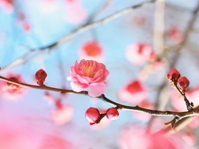「幸せタイムリー~幸運を引き寄せ運勢を好転させる方法」~運を強化し、願いを叶えるキーポイント PART.31