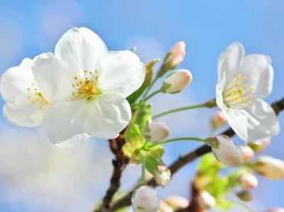 成長と活動のエネルギーが満ちる季節~春にふさわしい心の持ち方~