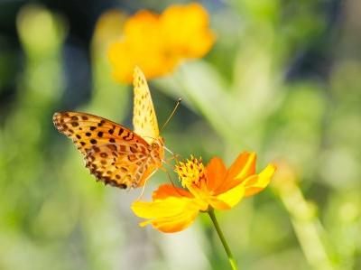 荘子に学ぶ『胡蝶の夢』とは?~夢の中の私は一体?~