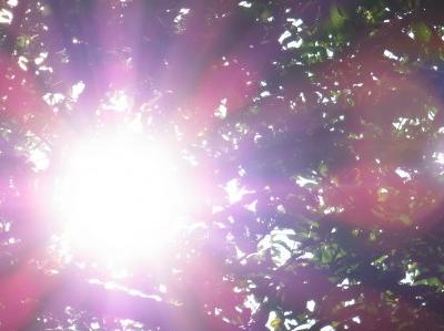 ポカポカ暖かい心と身体で一層元気に!~おひさまと自然界の緑~