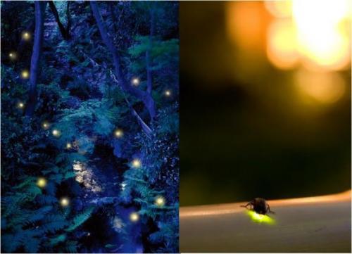 都会の森で楽しむ非日常のひととき…都会のオアシスでほたる観賞 ホテル椿山荘東京「~Linkする~ ほたるの夕べ」