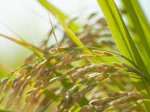 「玄米はぼそぼそしていて食べづらい」と敬遠している方にオススメ!「野菜だけでおいしい 酵素玄米どんぶり」