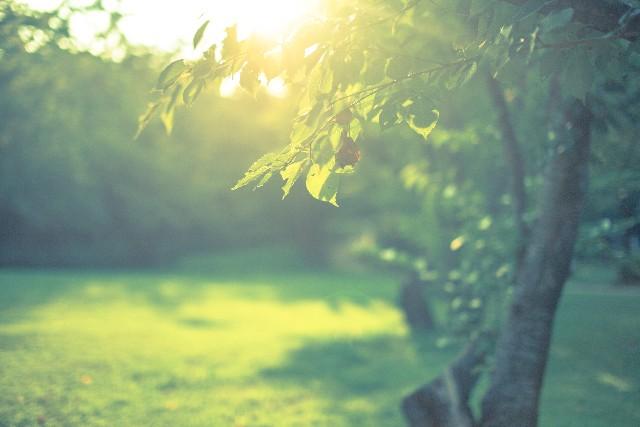 森林療法と腹式呼吸でストレスフリーライフ!ホリスティック療法医・降矢英成先生の健康法