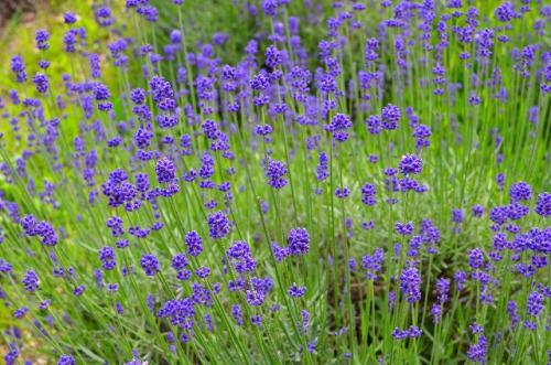 【植物のチカラで美しく♪豊かに♪】あこがれのセレブ肌!真夏のアロマフェイシャルケア