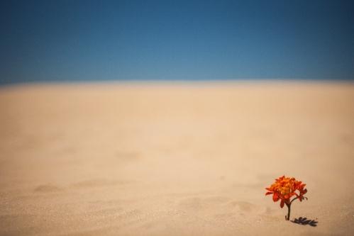 おのころ心平さん [砂漠の動物心理テスト]怒りや不安や恐れ悲しみは「何に対して」のものなのか
