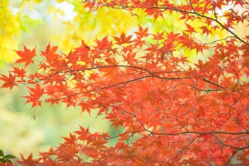 秋の土用期間の過ごし方は、自分の心と身体の声を聴き、愛しく大切にする期間…これも風水