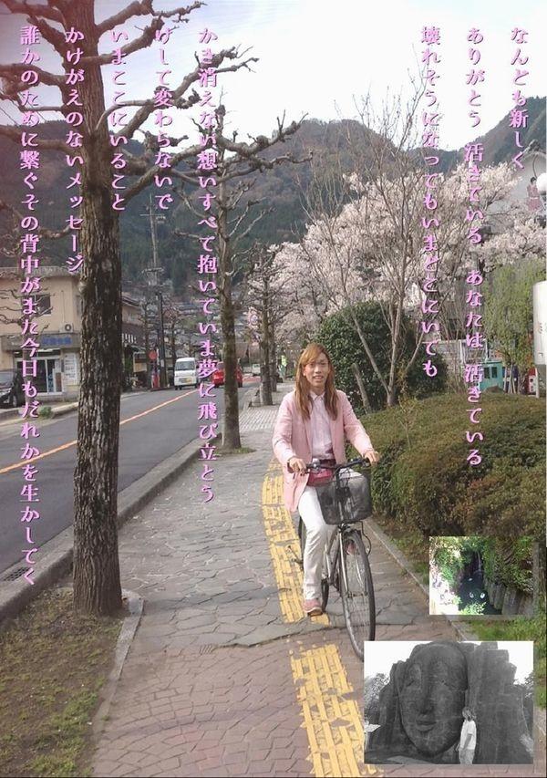 ともくん自転車サクラの写真①
