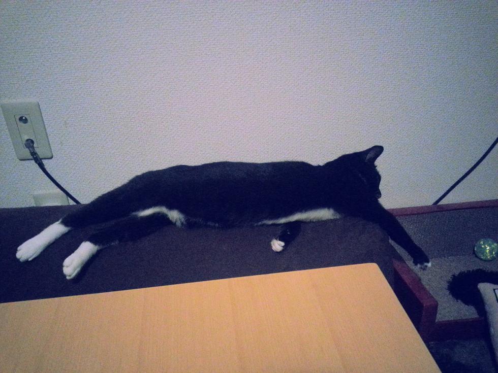 20140616_232623  伸びた猫