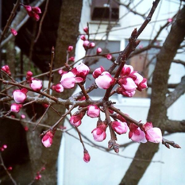 本日3/22 春分の日直前の「新月」は、<br>12星座最後の魚座から牡羊座へ移行