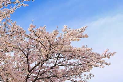 花粉症をココロから診たその原因と酷使している臓器、花粉症の治し方。自然治癒力のスペシャリスト・おのころ心平さんが解説します!