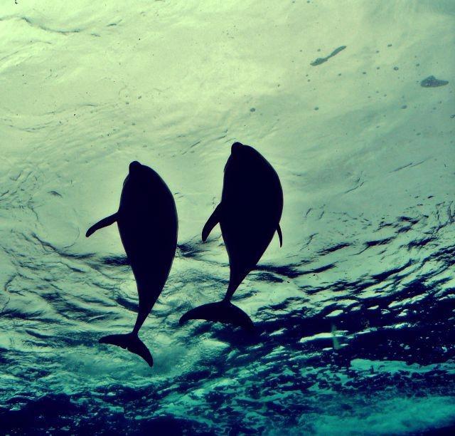 感情美人への道Vol.11~<br>イルカが打ち上げられると不安になる理由〜
