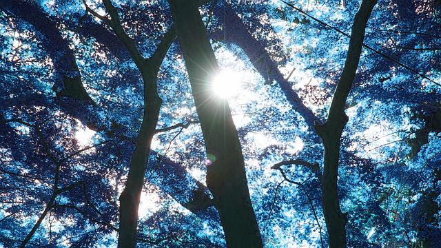 地球上における死後の世界 〜散骨、樹木葬、あなたはどうなりたいですか?〜