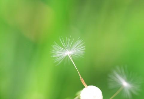生命力に溢れ、神託も伝えてくれる綿毛の力を借りよう
