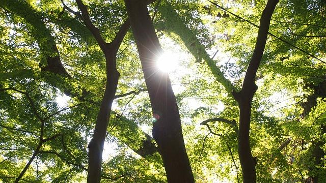 新緑の季節だからこそ、木と会話してみよう!
