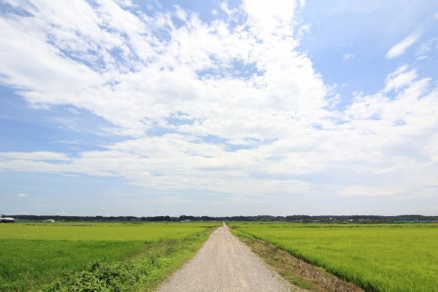 スピリチュアル通訳/翻訳家のススメ<br>〜夏のエネルギーを吸収しよう〜