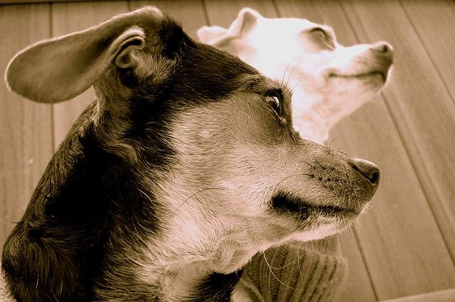 「日本人はペットへの認識が遅れている? 日本2万匹が流通過程で命を失うペット販売の実態」