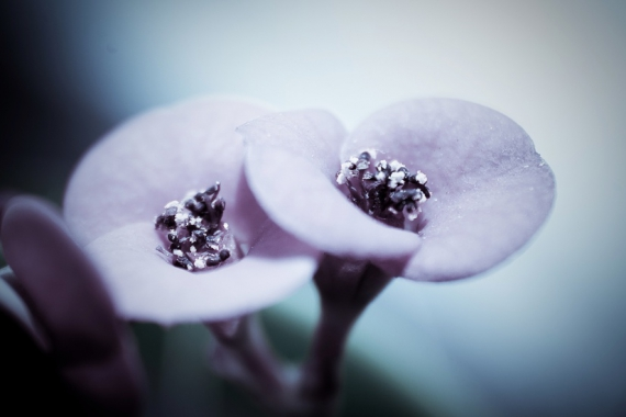 plant-flower-macro-large