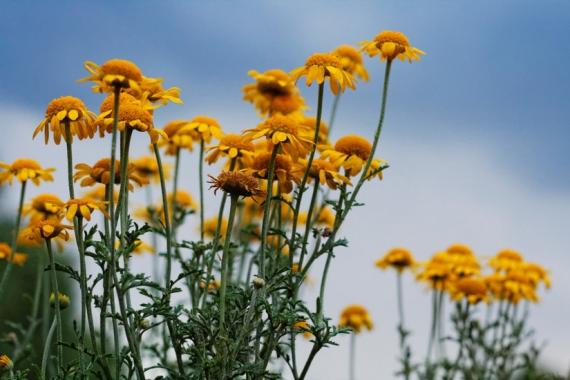sky-flowers-large