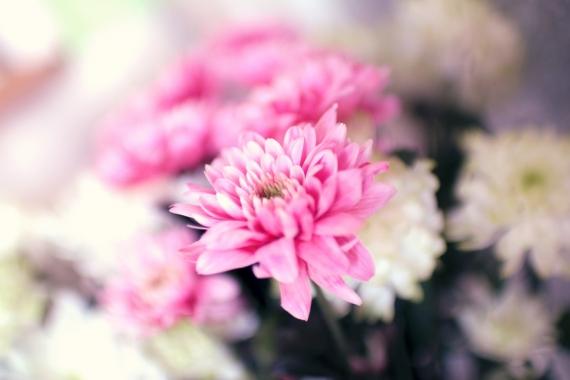 summer-spring-flower-pink-large