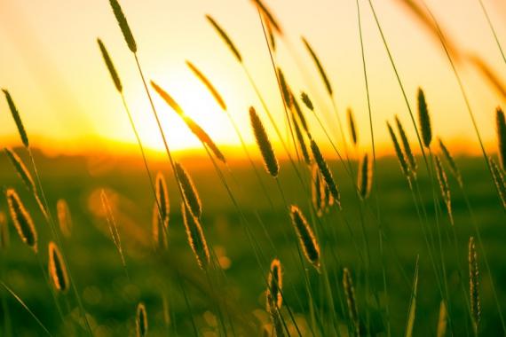 summer-sun-yellow-photography-large