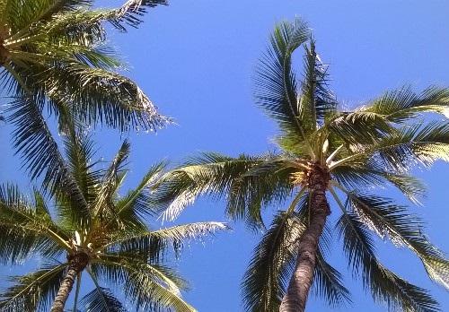 癒しアイテム;ハワイ