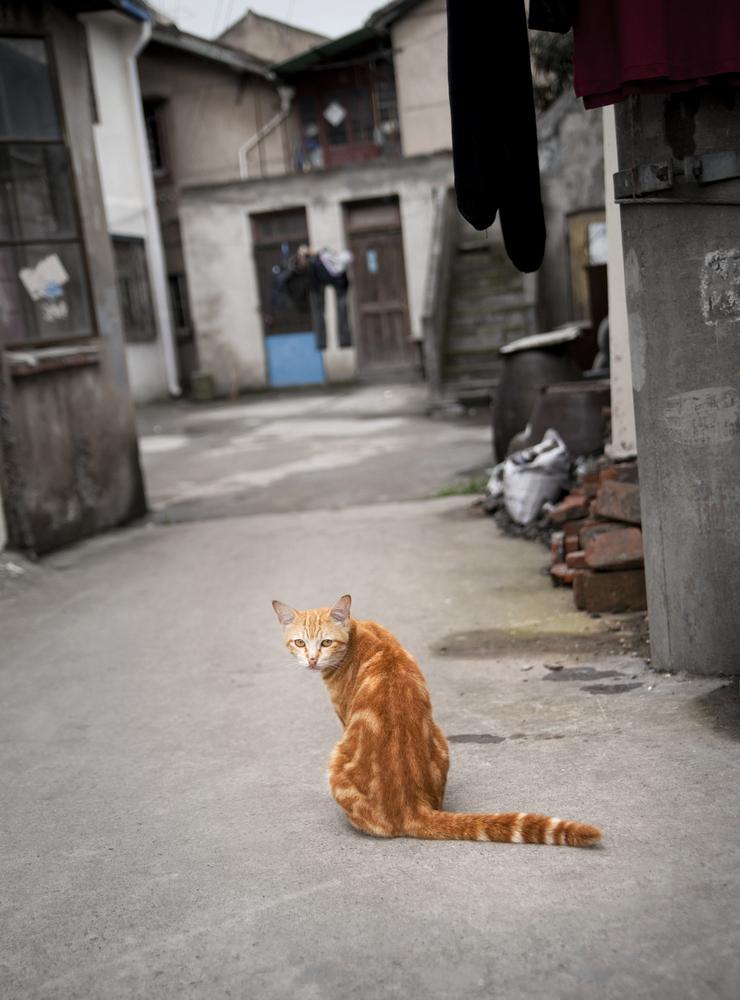 路地裏の猫57422347