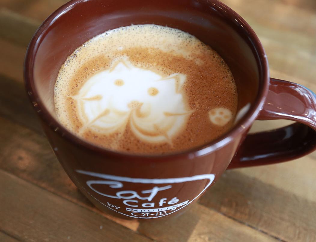 『ペット』カフェだけじゃない!! 『コーヒー占い』『駆け込み寺』など今注目の癒しカフェとは!?
