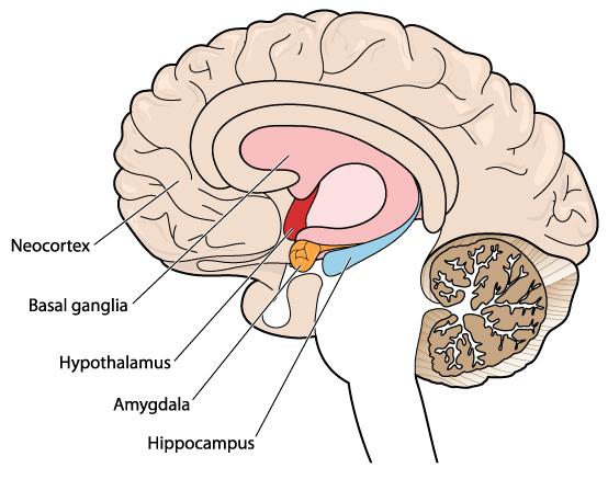 脳は主語を理解できない_329843930