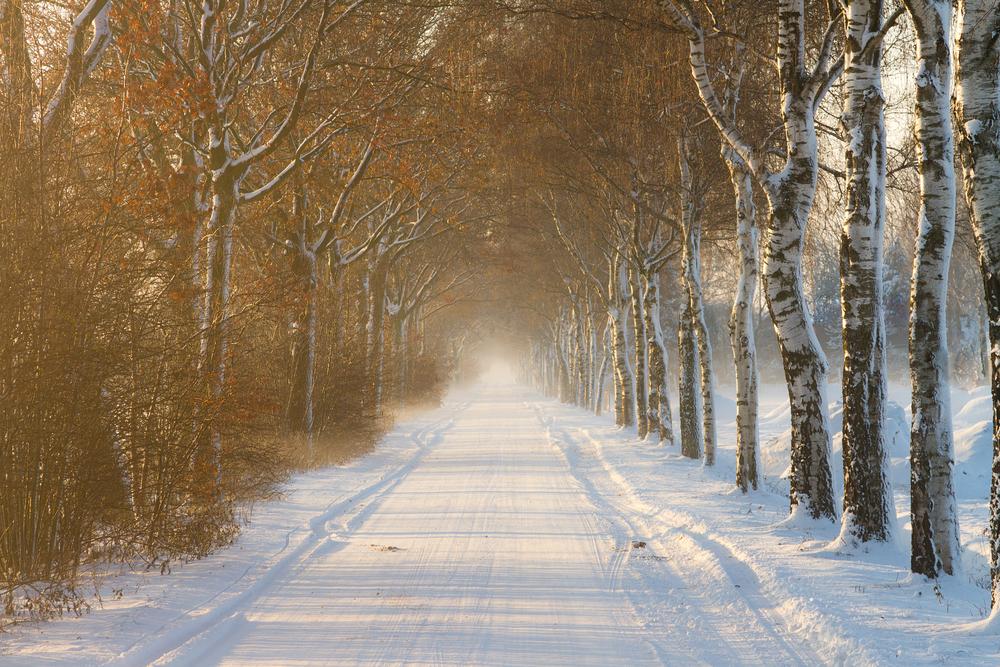 冬並木道86436088
