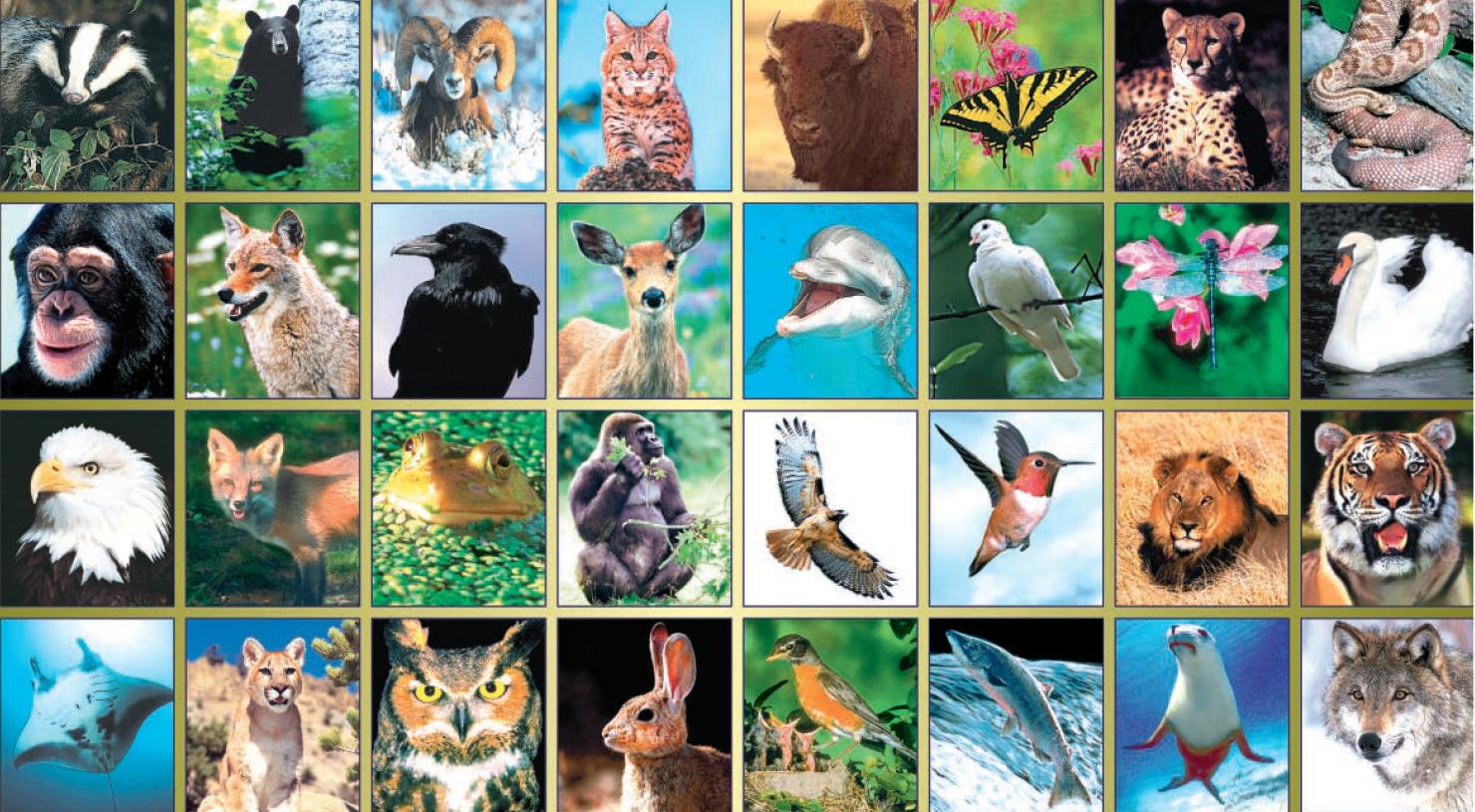 20151225 動物の写真(1)