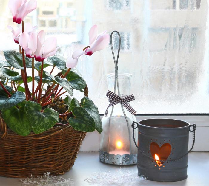 内気さの中に神秘の力を秘めた冬に咲く花 シクラメン