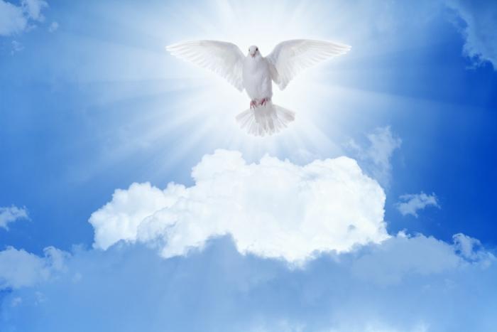 「綿毛に包まれて生きていく」~Vol.12 神聖なエネルギーに触れること
