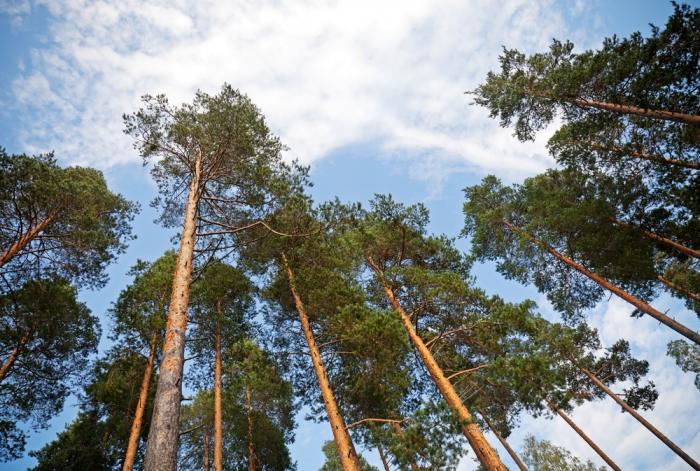 樹木が教えてくれること〜伝統建築と現代建築の違いにみる自然の叡智