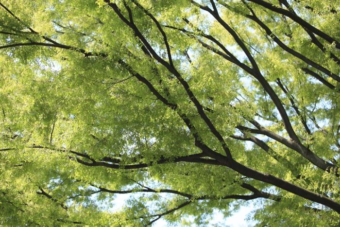 植物たちの持つエネルギー〜久慈悟子が教えるアニマルエッセンスPart.27