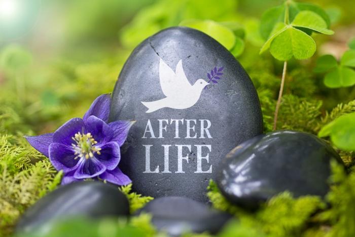 死んだ後にあなたは何に生まれ変わりたいですか?