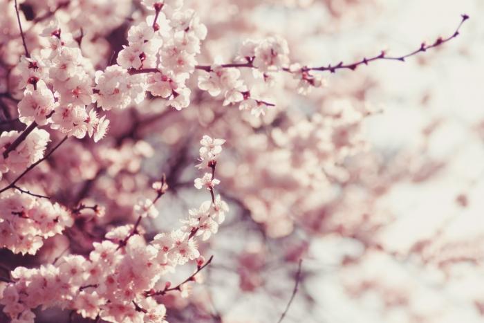 【神秘】桜の木に神が宿る? 勝負は2週間!<br>♡恋愛成就法♡