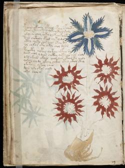 800px-Voynich_Manuscript_(32)