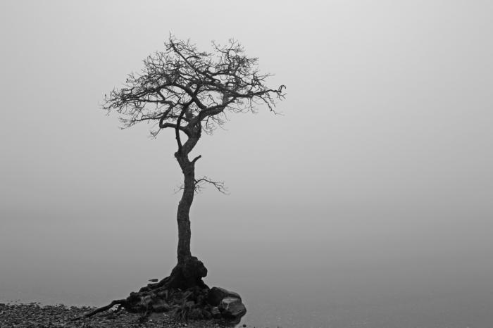 絶対的な悪を象徴する邪悪の樹