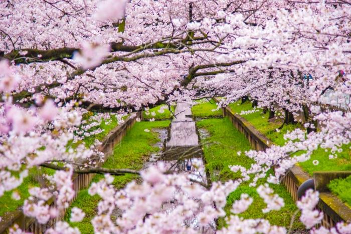 春から新生活〜その場に集中し、物事に向き合いましょう〜